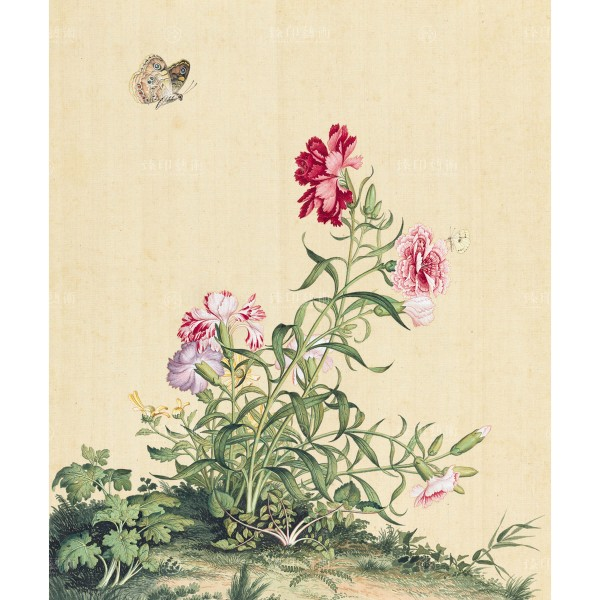 Dianthus, Giuseppe Castiglione, Qing Dynasty, Immortal Blossoms in an Everlasting Spring, Giclée