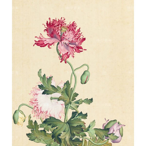 Poppy, Giuseppe Castiglione, Qing Dynasty, Immortal Blossoms in an Everlasting Spring, Giclée