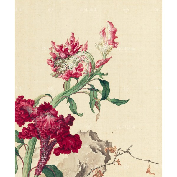 Celosia Cristata, Giuseppe Castiglione, Qing Dynasty, Immortal Blossoms in an Everlasting Spring, Giclée