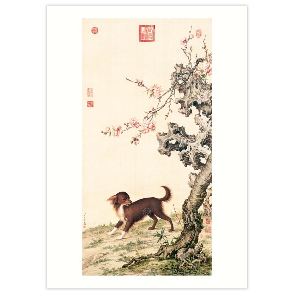 B4 Size, Print Card, Long–haired Dog Beneath Blossoms, Giuseppe Castiglione, Qing Dynasty