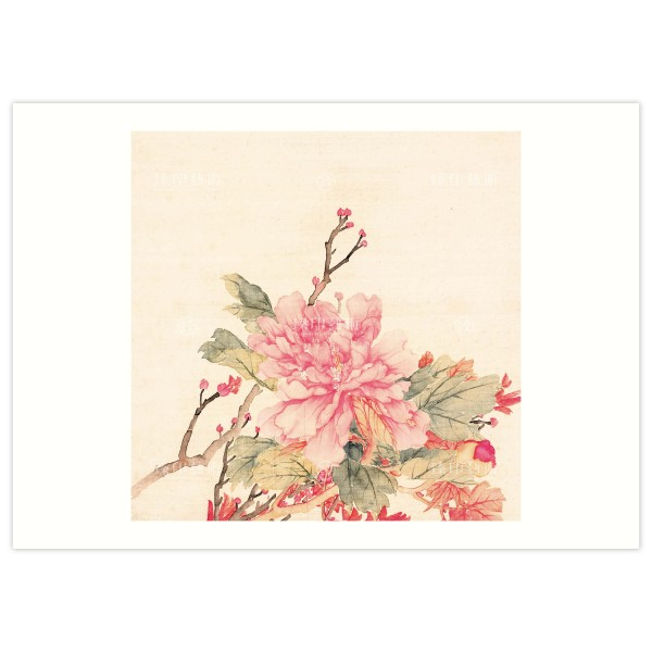 B4 Size, Print Card, Peonies-Pink, Li Peiyu, Qing Dynasty