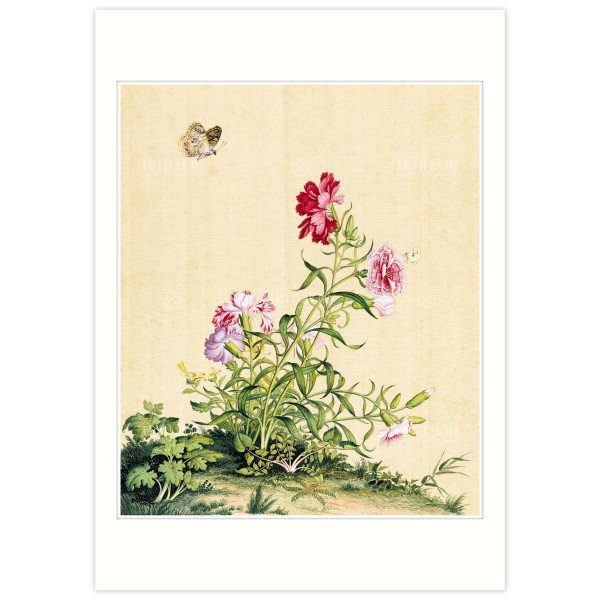 B4 Size, Print Card, Dianthus, Immortal Blossoms in an Everlasting Spring, Immortal Blossoms in an Everlasting Spring, Giuseppe Castiglione, Qing Dynasty
