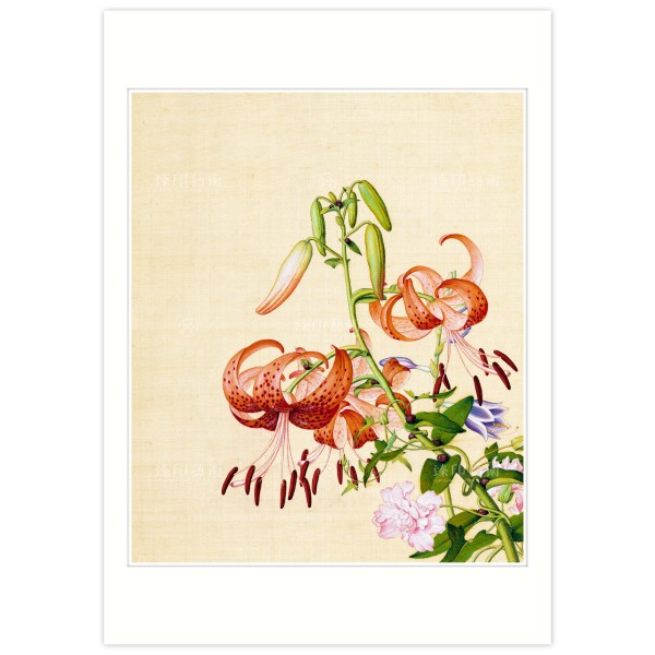 B4 Size, Print Card, Lily & Peony, Immortal Blossoms in an Everlasting Spring, Immortal Blossoms in an Everlasting Spring, Giuseppe Castiglione, Qing Dynasty