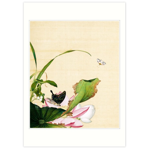 B4 Size, Print Card, Lotus Flower and Arrowhead, Immortal Blossoms in an Everlasting Spring, Immortal Blossoms in an Everlasting Spring, Giuseppe Castiglione, Qing Dynasty
