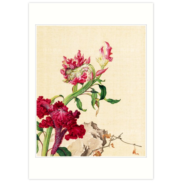 B4 Size, Print Card, Celosia Cristata, Immortal Blossoms in an Everlasting Spring, Immortal Blossoms in an Everlasting Spring, Giuseppe Castiglione, Qing Dynasty